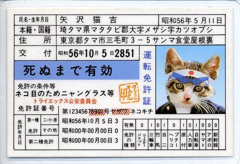 なめ猫3.jpg